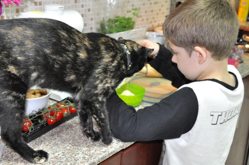 Die Katze hielt's nicht mehr aus und musste die Herstellung der Semmelbrösel aus der Nähe begutachten